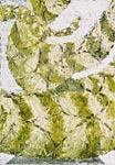 Schlangenblatt, Öl auf Leinwand  70x100cm, 2003