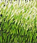 RasenGrasWiese6, Öl auf Leinwand 110x130cm, 2008